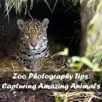 Tips for Zoo Photography: Capturing Amazing Animals