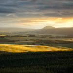 Sunset over Yellow Fields