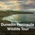 Dunedins Peninsula Wildlife